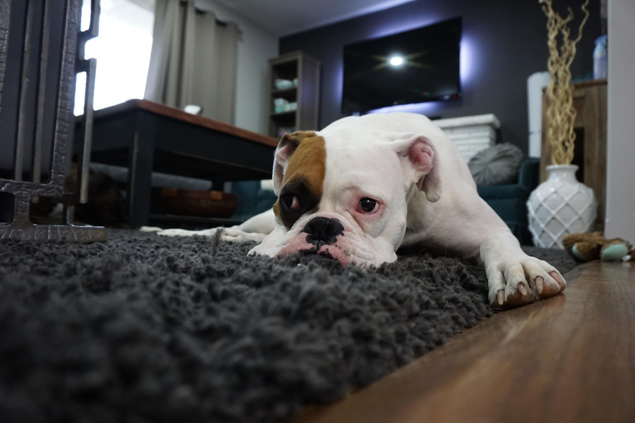 symptoms of a dog being homesick kelowna pet services best dog walker