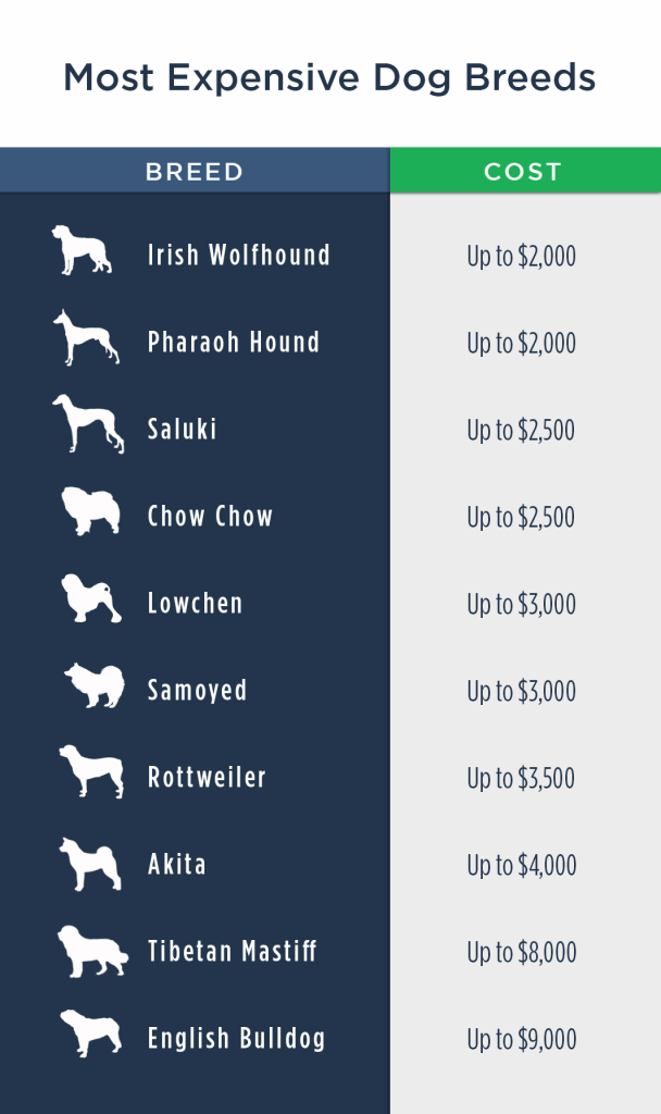 the cost of owning a dog Most-Expensive-Dogs-2-608x1024
