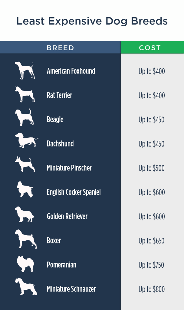 the cost of owning a dog Least-Expensive-Dogs2-608x1024